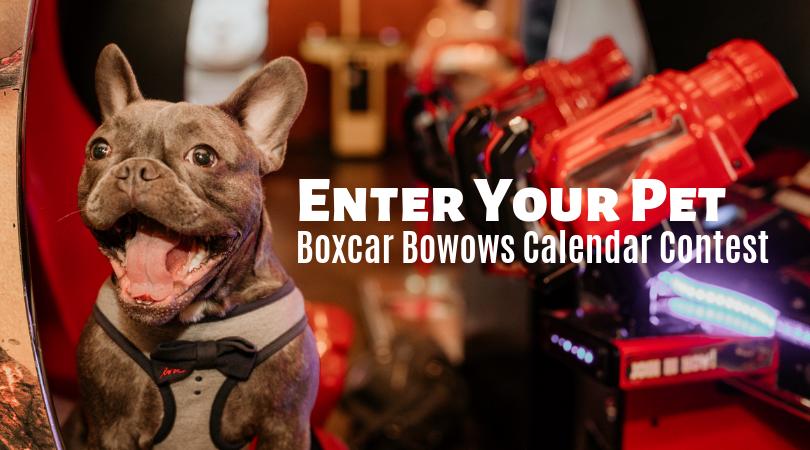 boxcar bowows calendar contest